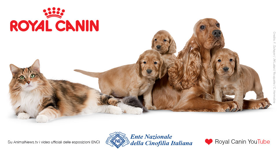 Banner-Royal-Canin