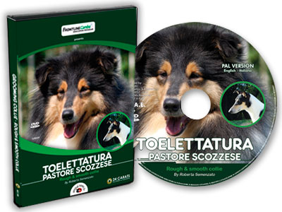 Toelettatura Collie